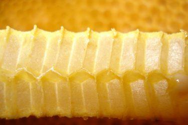 Bienenwabe im Querschnitt